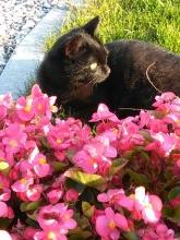 Il gatto comodo in giardino