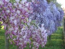 Giardino in fiore-10