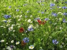 Giardino in fiore-11