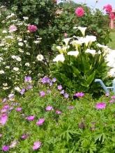 Giardino in fiore-15