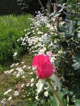 Giardino in fiore-16