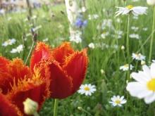 Giardino in fiore-6