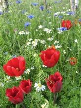 Giardino in fiore-7