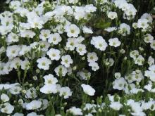 Giardino in fiore-8
