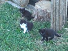 I tre gattini