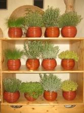 Vasi di argilla con piante aromatiche